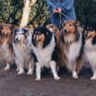 Collies of Graceland
